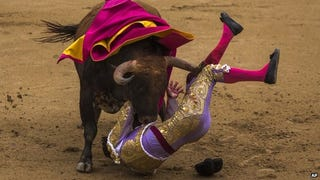 Illustration for article titled Bullfighting Festival Canceled After All Three Bullfighters Gored