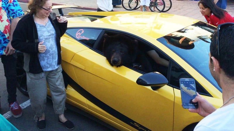 Illustration for article titled Bear In A Lamborghini Shuts Down LA Traffic