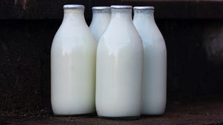 Illustration for article titled Reasons to Hate Alternative Milks and the Smug Jerks Who Love Them