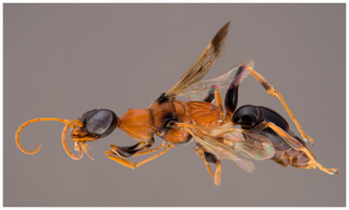 Illustration for article titled Harry Potter Fans Name Brain-Paralyzing Wasp After Dementors, Natch