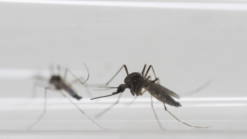 First Case Of Woman Spreading Zika Through Sex Reported In NYC