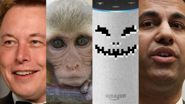 Elon Musk s Monkey Tests, Dating Site Hell, and Alexa Nightmares: The Best Gizmodo Stories of the Week
