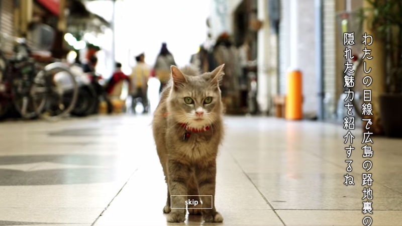 Illustration for article titled Japan Has a Google Street View Map for Cats