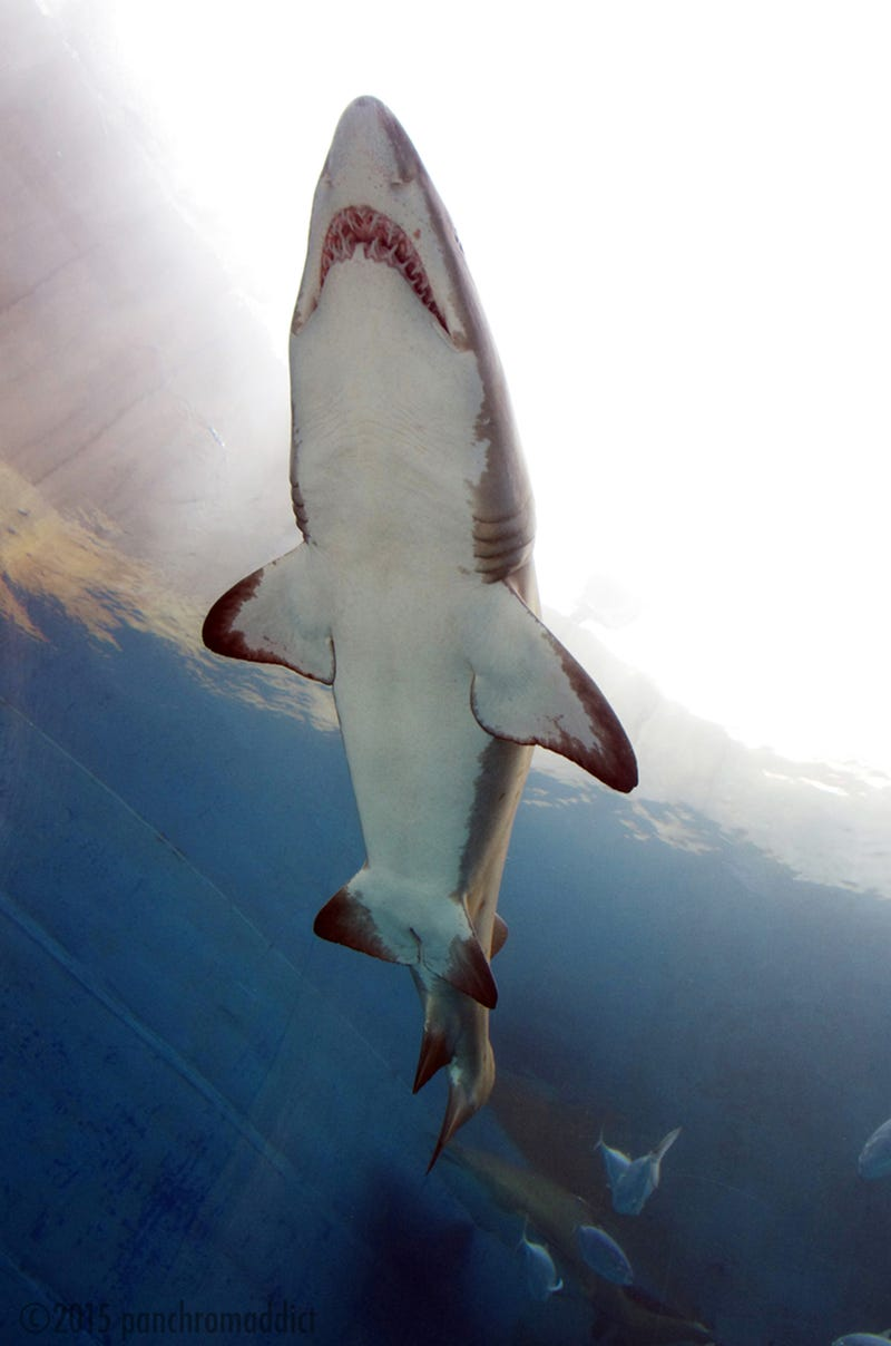 Illustration for article titled Photo of the Day: Shark Attack!