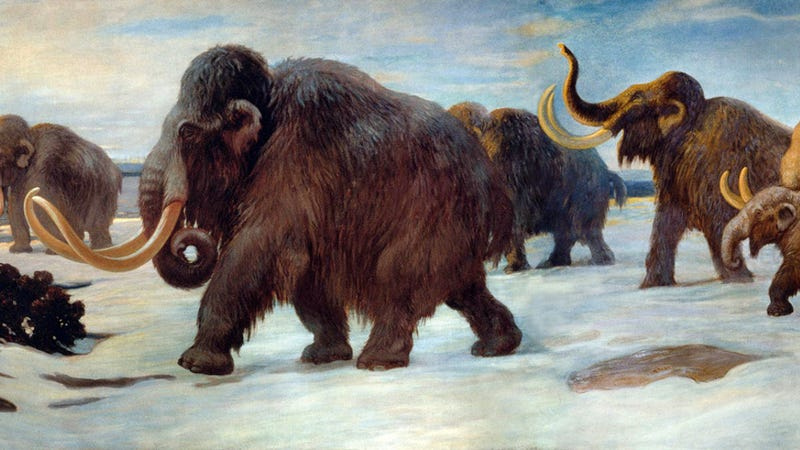 Portion of a mural depicting a herd of mammoths walking near the Somme River (1916) (Image: Charles R. Knight/American Museum of Natural History/Public Domain)
