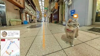 Illustration for article titled In Case You Want To Prowl Around Japan From the Point of View of a Cat
