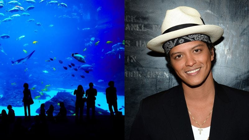 Illustration for article titled Can You Help Corroborate This Story That I Went To The Aquarium With Bruno Mars So My Daughter Will Respect Me?