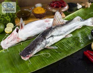 Illustration for article titled Now Buy Best Quality Of Luscious Bengali Fresh Fish Online On A Click