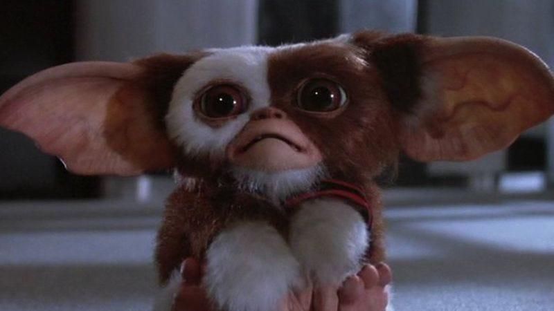 Gizmo just wants love (Photo: screencap)