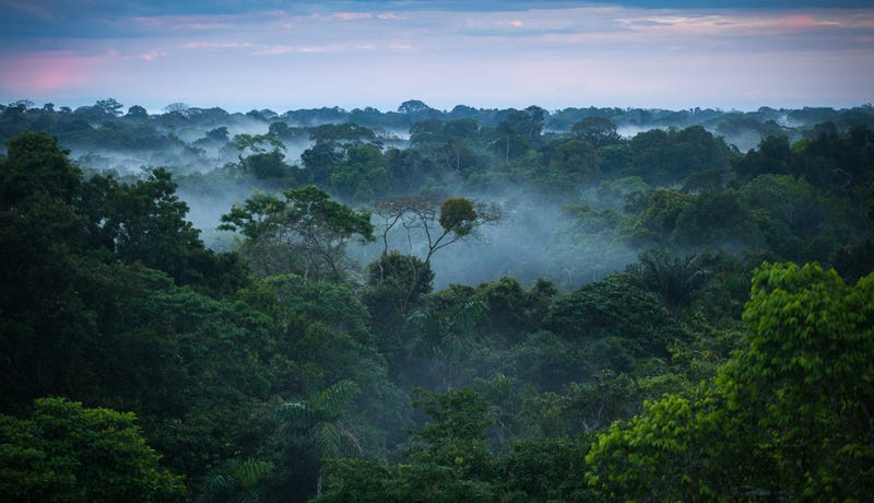 Illustration for article titled Esta mujer se adentró en la selva del Amazonas con 41 personas para encontrar a su marido. Solo regresó ella