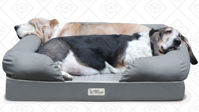 Pet Bed Gold Box
