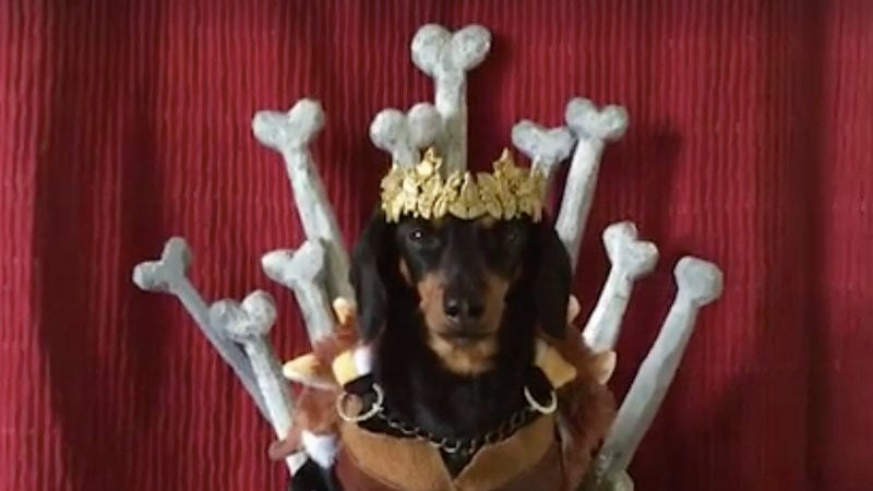Game Of Bones (Photo: Crusoe the Celebrity Dachshund/Facebook)