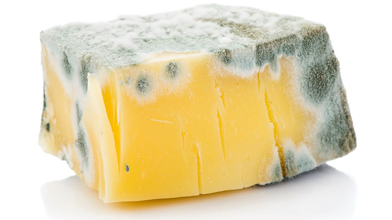 Illustration for article titled Does a little mold spoil the whole block of cheese?