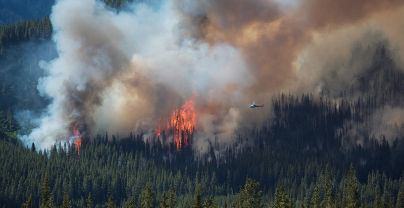 Illustration for article titled Alaskan Forest Fires Could Make Climate Change Much Worse