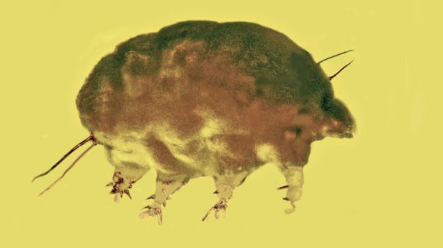 You've Heard of Water Bears, but How About These Ancient Mold Pigs?