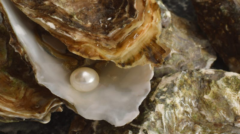 Illustration for article titled Lucky mothershucker finds a pearl in his oyster dinner