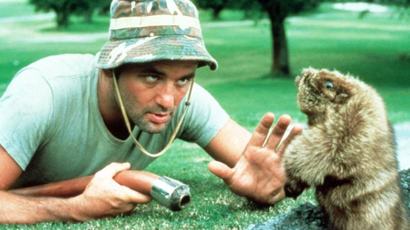 Illustration for article titled Bill Murray's opening a Caddyshack restaurant near Chicago