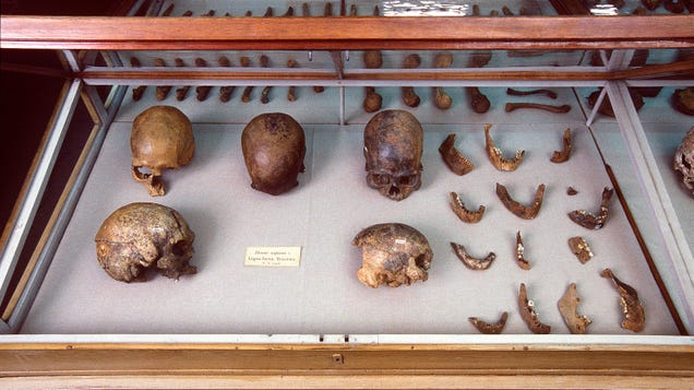 Three New DNA Studies Are Shaking Up the History of Humans in the Americas