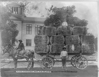 """King Cotton and his slaves, Greenwood, Miss."" Photograph shows three African-American men and one boy posed with a horse-drawn wagon loaded with bales of cotton in front of the Leflore County, Miss., courthouse.Library of Congress"