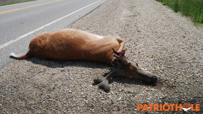 Roadkill on the side of the road.