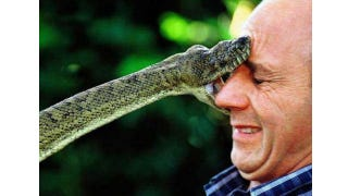 Illustration for article titled Angina Rub Could Keep You Alive After Being Fanged by a Cobra