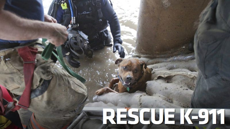 Illustration for article titled This Amazing Dog Rescue May Be The Coolest Thing You'll See Today