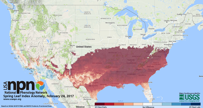 An anomaly map showing the degree to which early spring has appeared in the US. In Washington DC, spring arrived 22 days earlier than normal. (Image: US-NPN)