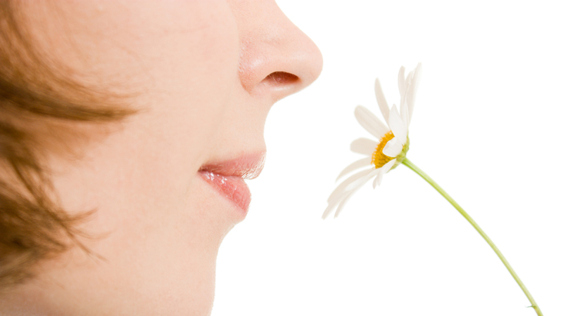 How does the sense of smell work? | HowStuffWorks
