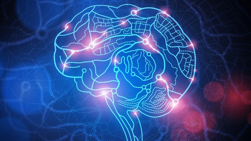 Illustration for article titled Rat Brains Are Organized Like The Internet