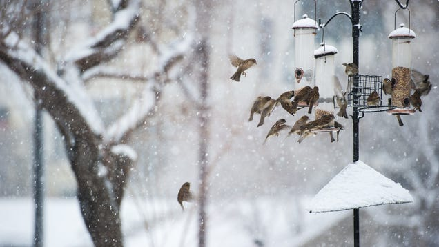 There s Still Time to Join the Christmas Bird Count