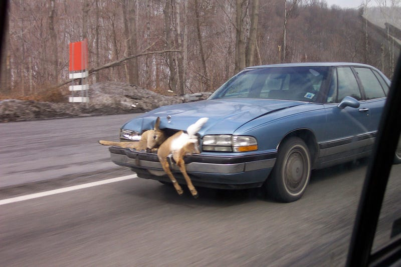 Image result for deer in a buick grill