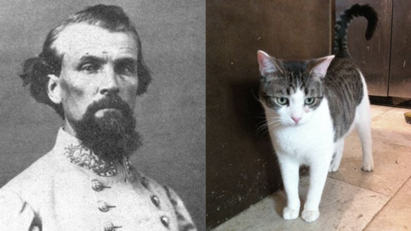 Illustration for article titled Cat Thinks It's Civil War Lieutenant General Nathan Bedford Forrest!