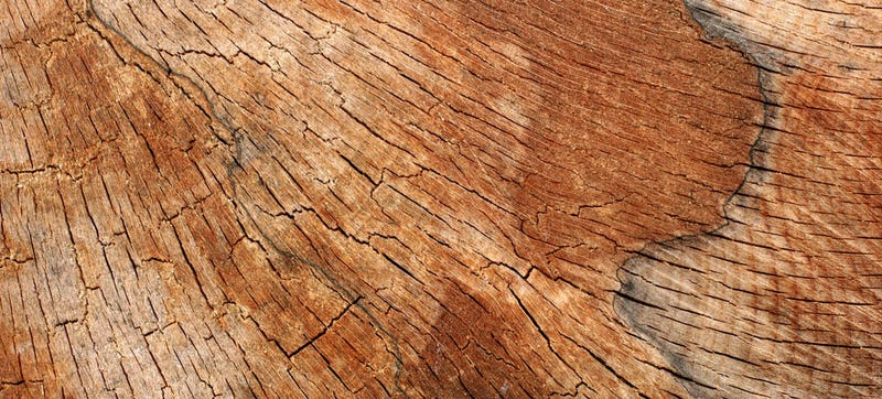 Softwood Trees In Florida ~ The difference between hard and soft wood has zero to do