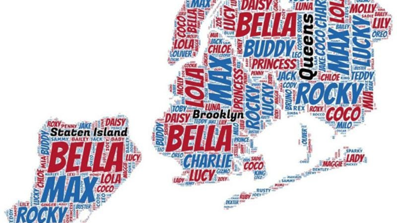 Illustration for article titled Here are New York City's most popular dog names, mapped out