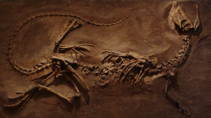 Imagen: Dilophosaurus wetherilli (Royal Ontario Museum, Toronto).