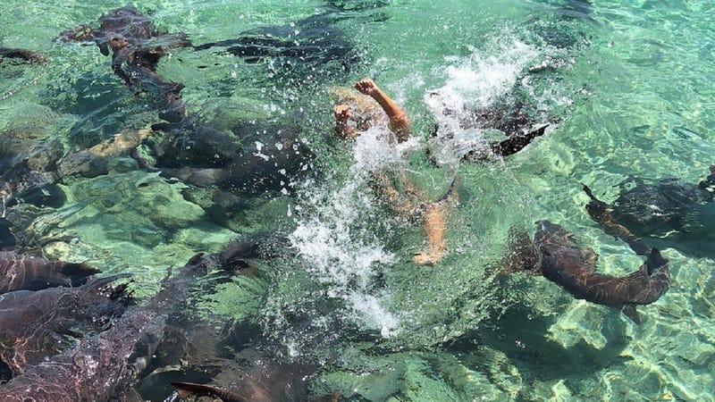 Illustration for article titled El momento en que un tiburón ataca a una modelo de Instagram que quería hacerse una sesión de fotos con ellos