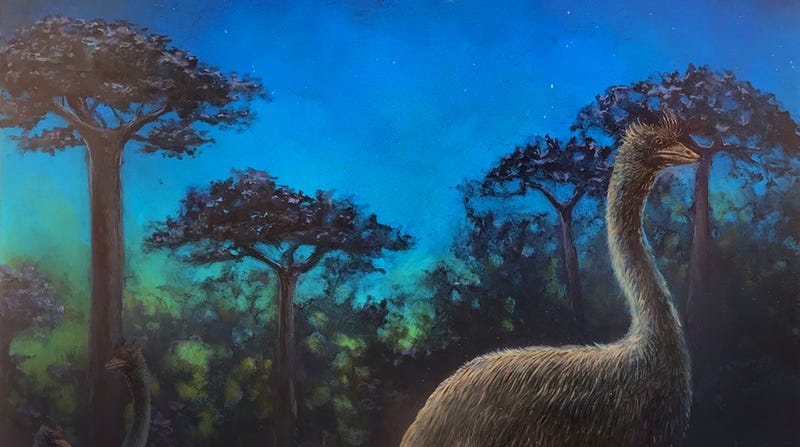 Artist's depiction of a nocturnal elephant bird in Madagascar.