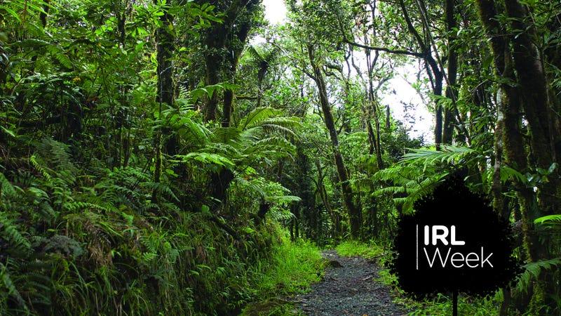 The Luquillo rainforest in Puerto Rico