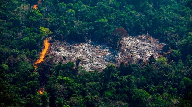 Amazon Invests in the Amazon Rainforest Instead of Just Paying Its Damn Taxes