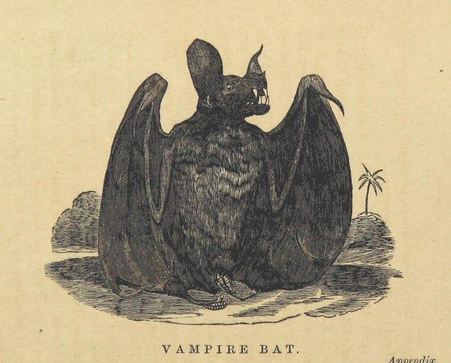 A Creepy-Cute Vintage Illustration Of A Vampire Bat