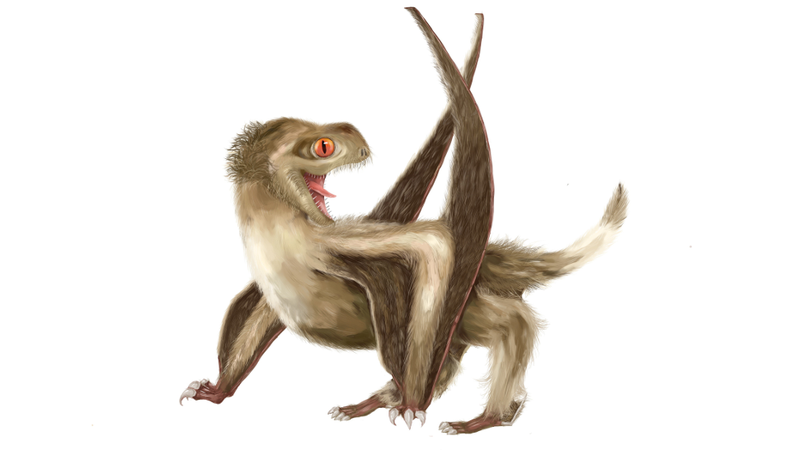 Artist's interpretation of the pterosaur described in the new study.
