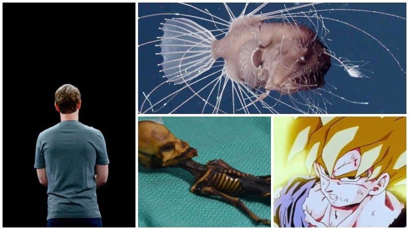 El origen del pelo de Goku, el horrible apareamiento del rape y una momia diminuta. Lo mejor de la semana