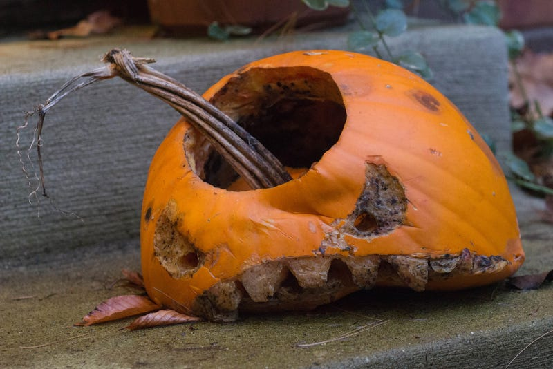 How to keep ants out of carved pumpkin