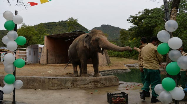 World s Loneliest Elephant  Will Finally Have Some Friends
