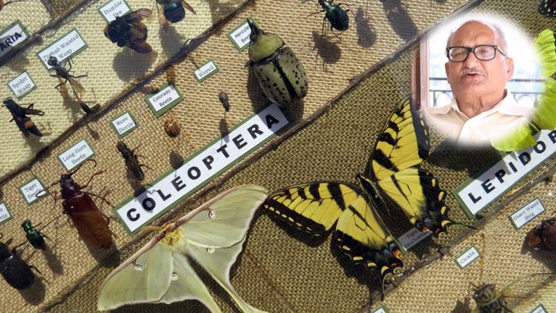 Illustration for article titled How do you pursue a Career in Forest Entomology?