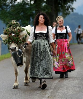 Illustration for article titled Germans Gussy Up Their Cows