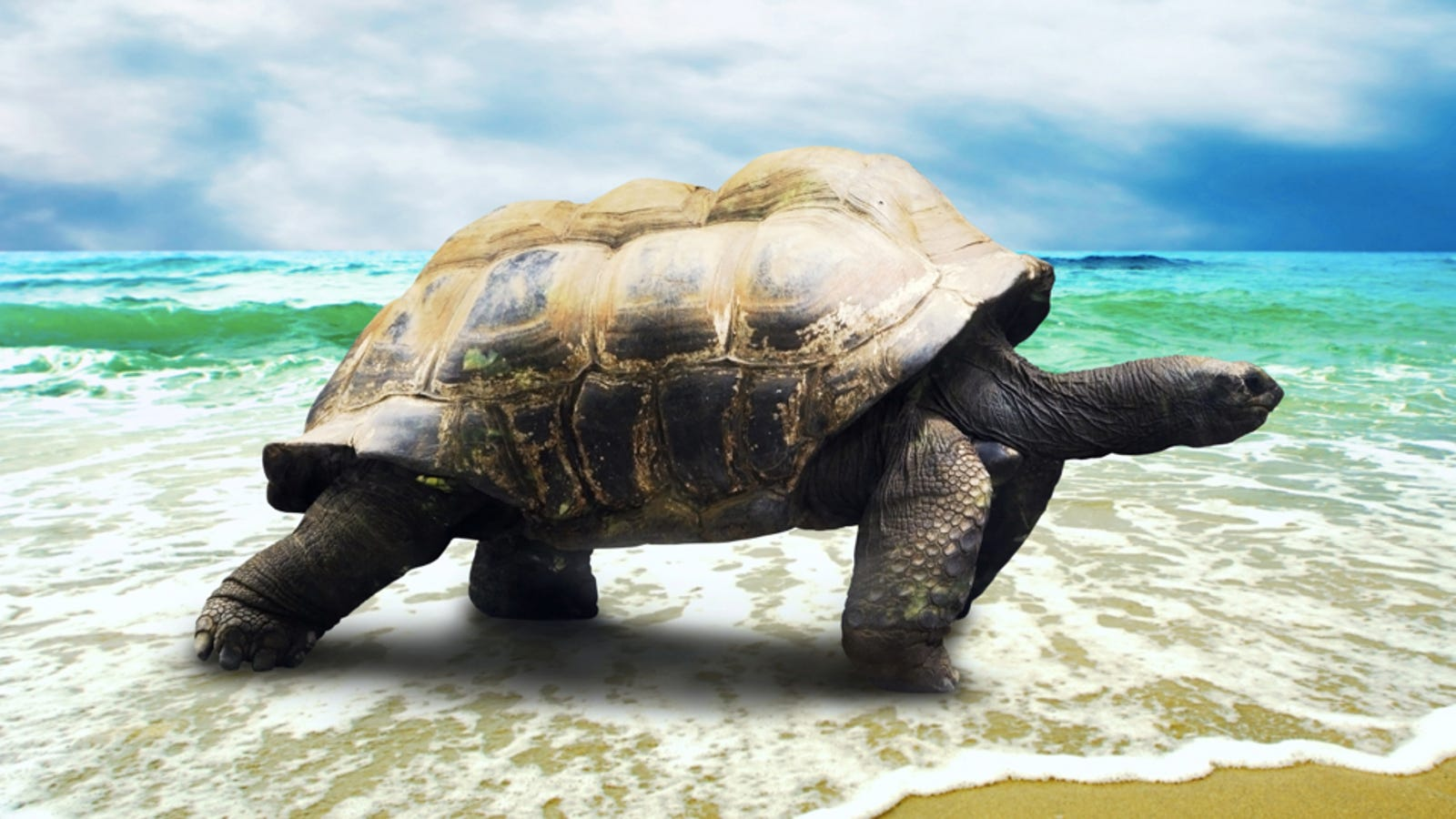 The Terrifying Sex Organs of Male Turtles