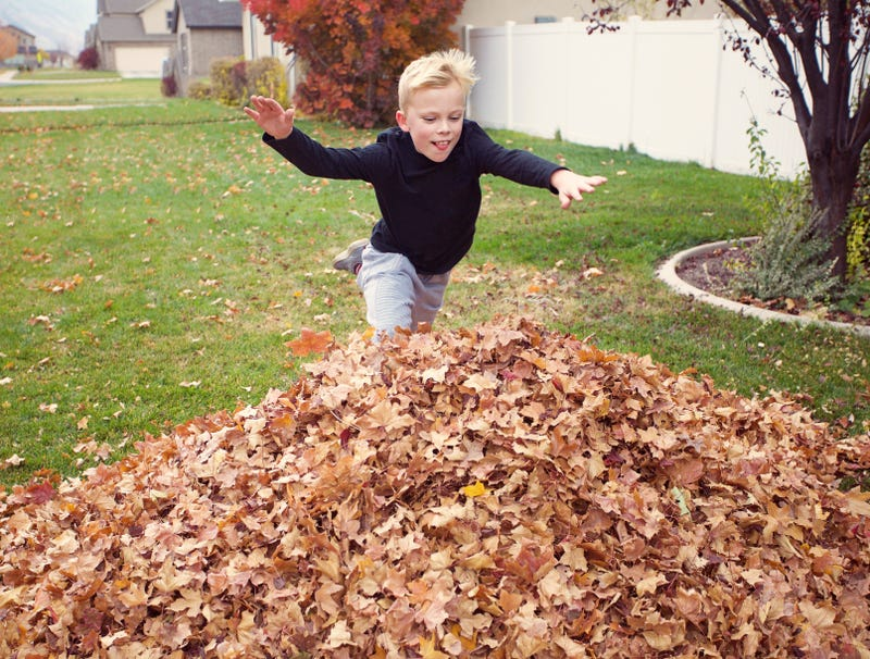 Illustration for article titled Kid Diving Into Pile Of Leaves Has No Idea There Homeless Guy Jerking Off In There