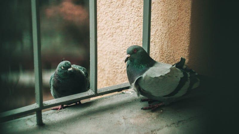 Bird metaphor #6871