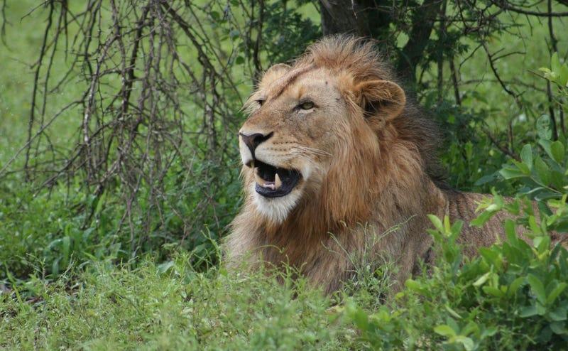 La imagen de dos cazadores besándose frente al león que acaban de matar debería hacerse viral